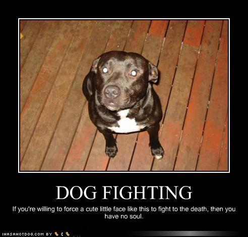 Dogs Stop Cats Fighting